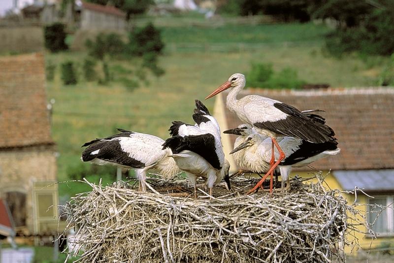 Znalezione obrazy dla zapytania ptaki wracaja do gniazd