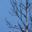 Zbliża się letnia burza. W taką pogodę bociany wcześniej szukają miejsca na nocleg. (foto P. Szymoński)