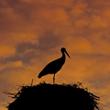Po zachodzie słońca do żywkowskiej kolonii powraca spokój.  (foto P. Szymoński)