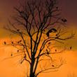Bociany, które nie mają w danym roku lęgów, często nocują zespołowo. Już przed wschodem słońca na drzewie noclegowiskowym zaczyna się ruch. Ptaki koczujące w okolicach Sylgin na Warmii znalazły tu wyśmienite warunki: podmokłe łąki jako żerowisko i stojące (foto P. Szymoński)
