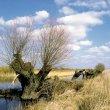 Rozlewiska dolnej Warty w rezerwacie przyrody Słońsk (obecnie Park Narodowy 'Ujście Warty') to istny bociani raj. (foto P. Szymoński)