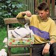 Każda bociania tragedia powoduje odruchy litości i chęć niesienia pomocy. Ten młody bocian wypadł z gniazda we wsi Kłopot. Zaopiekował się nim syn gospodarza Hubert Polak. (foto P. Szymoński)