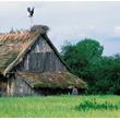 Takie obrazki to już dzisiaj rzadkość. Kryte strzechą dachy, takie jak we wsi Mocarze nad Biebrzą, od wieków były chętnie zajmowane przez bociany. Niestety także na wschodzie Polski malownicza strzecha z bocianim gniazdem zdaje się nieodwracalnie zanikać.  (foto P. Szymoński)