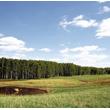 Bociany chętnie żerują na takich słabo zmeliorowanych polach uprawnych.  (foto P. Szymoński)